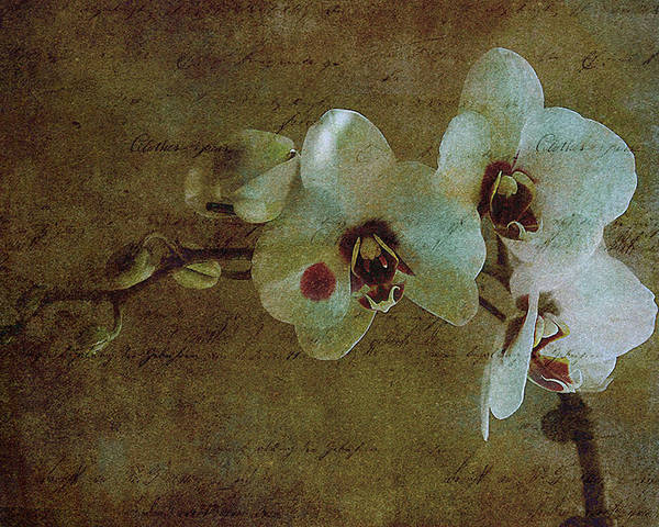 Orchid Poster featuring the photograph Orchid by Inesa Kayuta