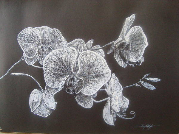 Poster featuring the painting Orchids by Iftikhar Ahmed