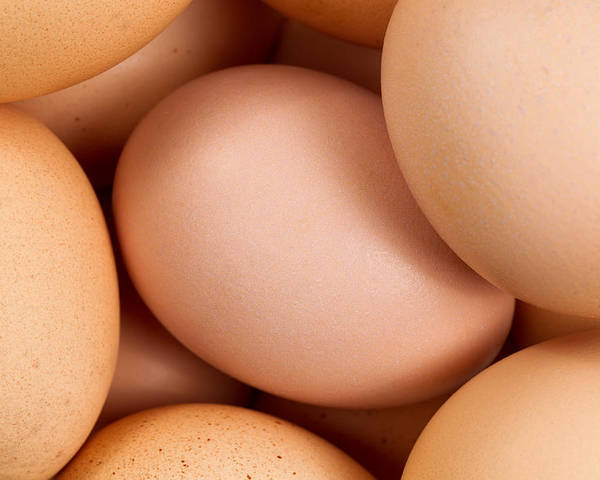Egg Poster featuring the photograph Organic Brown Eggs In Filled Frame Format by Thomas Baker