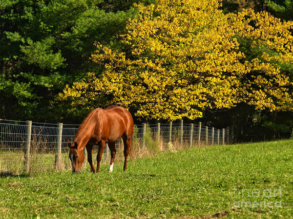 Horse Poster featuring the photograph Out To Pasture by Kathy Jennings
