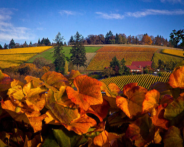 Oregon Poster featuring the photograph Over The Durant Vineyards by Marvin Mast