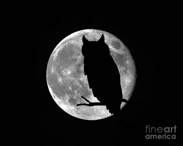 Full Moon Owl Poster featuring the photograph Owl Moon by Al Powell Photography USA