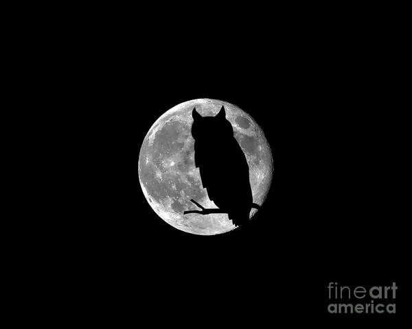 Moon Poster featuring the photograph Owl Moon .png by Al Powell Photography USA