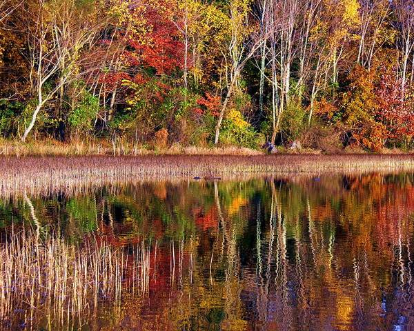 Autumn Poster featuring the photograph Paint Like Nature by Mitch Cat