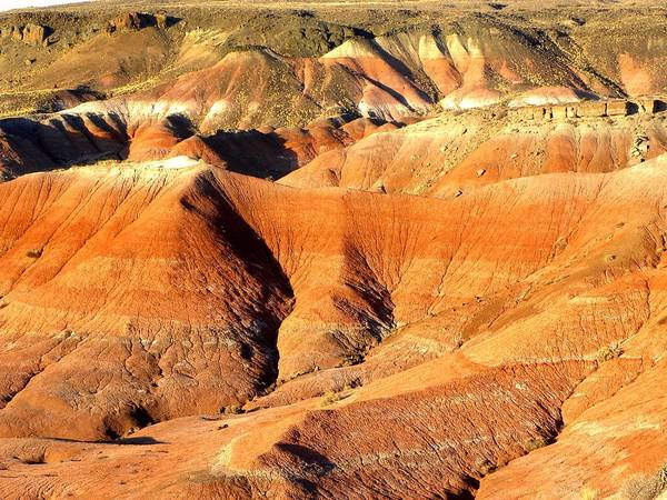 Photograph On Paper Poster featuring the photograph Painted Desert 4 by Patricia Bigelow