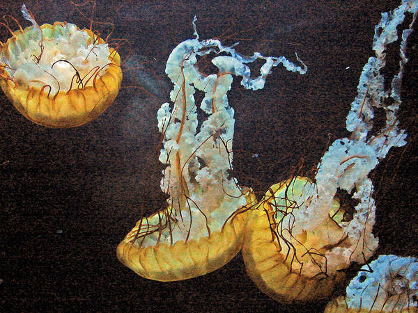 Jellyfish Poster featuring the digital art Painted Jelly by Bobby Miranda