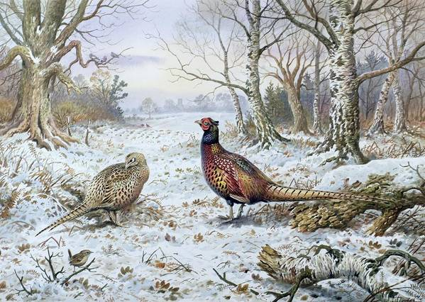 Game Bird; Snow; Woodland; Perdrix; Faisan; Troglodyte; Pheasant; Pheasants; Tree; Trees; Bird; Animals Poster featuring the painting Pair Of Pheasants With A Wren by Carl Donner