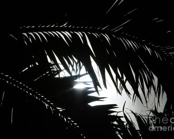 Palm Silhouettes Poster featuring the photograph Palm Silhouettes Kaanapali by Sharon Mau