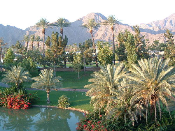 Landscape Poster featuring the photograph Palm Springs Ca by Cheryl Ehlers