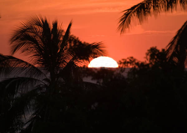 Sun Poster featuring the photograph Palm Sunset by Jim DeLillo