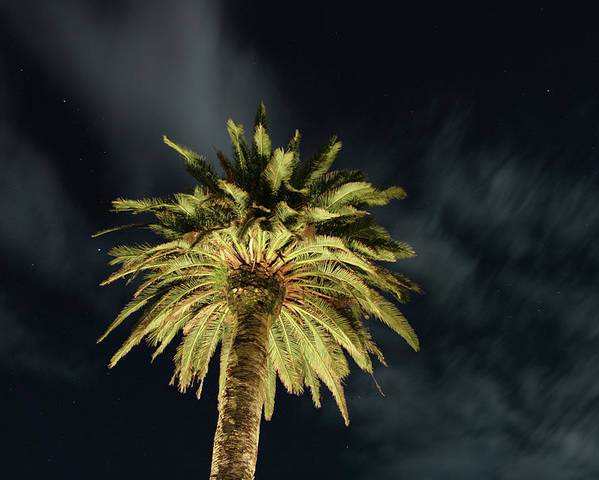 Palm Tree Poster featuring the photograph Palm Tree by Brian Middleton