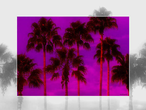 Palm Poster featuring the photograph Palm Tree Heaven by Kenneth Krolikowski