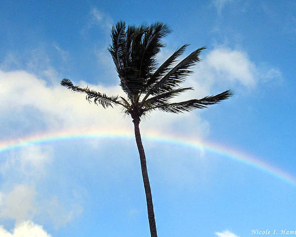 Palm Tree Poster featuring the photograph Palm Tree In The Sky by Nicole I Hamilton