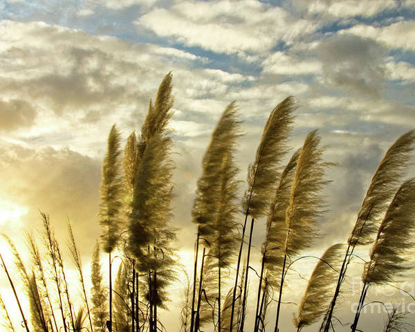Nature Poster featuring the photograph Pampas Grass by Julia Hiebaum