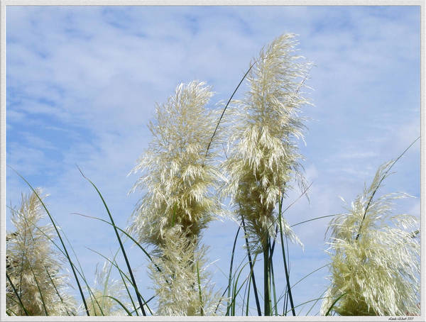Grass Sun Sky Floral Scenery Poster featuring the photograph Papas Grass In The Sun by Linda Ebarb