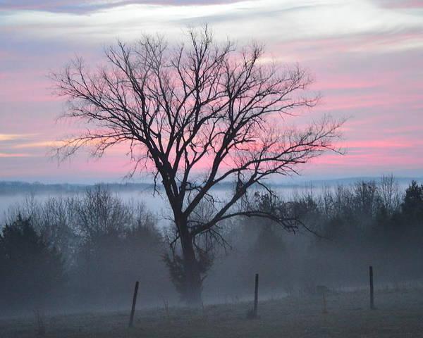 Sunrise Poster featuring the photograph Pastel Fog by Cathy Christian