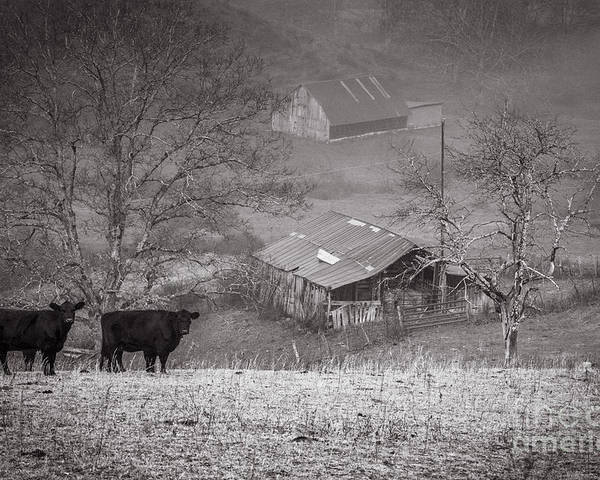 Pasture Field Poster featuring the photograph Pasture Field And Barns by Thomas R Fletcher