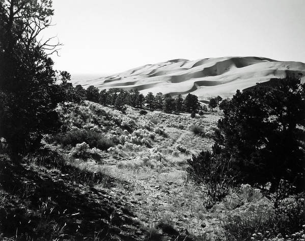 Landscape Poster featuring the photograph Path To The Dunes by Allan McConnell