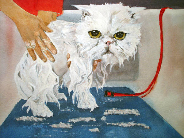 Cat Poster featuring the painting Pathetic Persian Gets A Bath by Kerra Lindsey