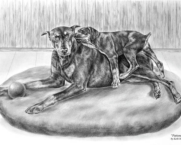 Doberman Poster featuring the drawing Patience - Doberman Pinscher And Puppy Print by Kelli Swan