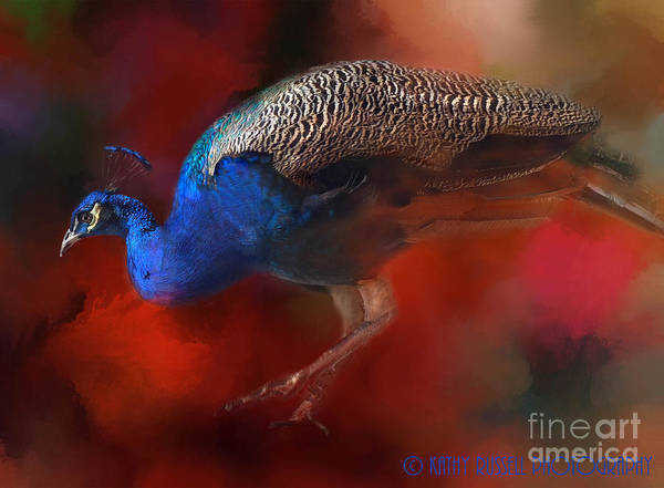 Colors Poster featuring the photograph Peacock Profile by Kathy Russell