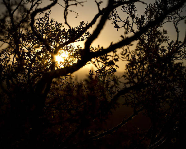 Desert Poster featuring the photograph Peeking Sun by Mike Hill