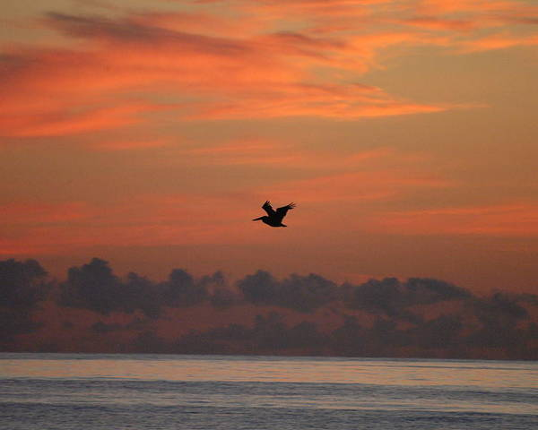 Pelican Poster featuring the photograph Pelican At Sunrise by Michael Vanatta