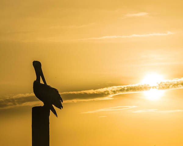 Carolina Beach Poster featuring the photograph Pelican Silhouette At Sunset by Ray Sheley