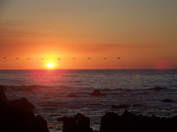Sunsets Poster featuring the photograph Pelicans In Flight by Maggie Cruser