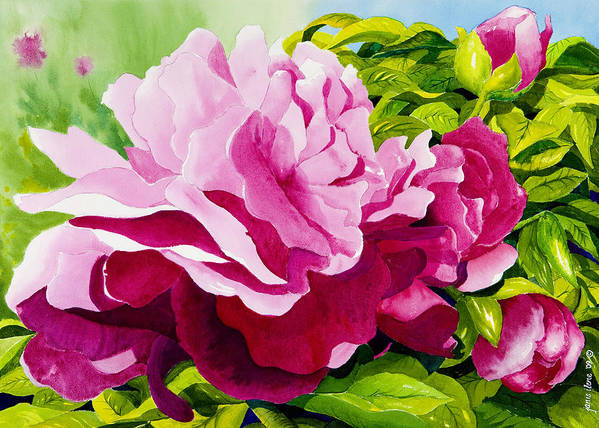 Flower Poster featuring the painting Peonies In Pink by Janis Grau