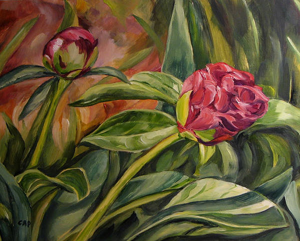 Garden Poster featuring the painting Peony Buds by Cheryl Pass