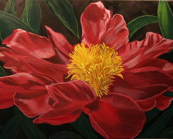Floral Poster featuring the painting Peony Japonica by Robert Tower