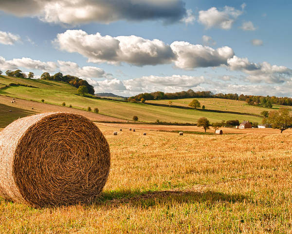 Straw Poster featuring the photograph Perfect Harvest Landscape by Amanda Elwell