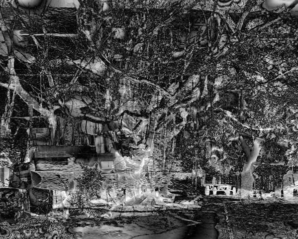 Tree Poster featuring the photograph Perturbations Backyard by Johnny Aguirre