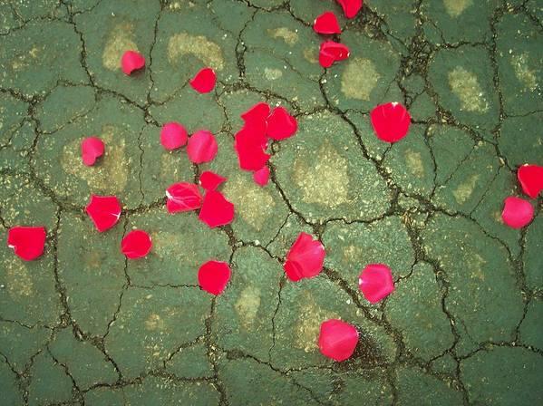 Red Rose Petals Asphalt Abstract Flowers Poster featuring the photograph Petals On Asphalt by Anna Villarreal Garbis