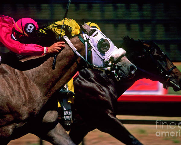 Horse Poster featuring the photograph Photo Finish by Kathy McClure