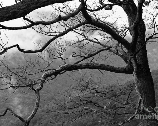 Tree Poster featuring the photograph 124 by Bryrrose Photography