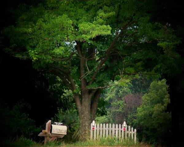 Picket Fence Poster featuring the photograph Picket Fence Mailbox by Michael L Kimble