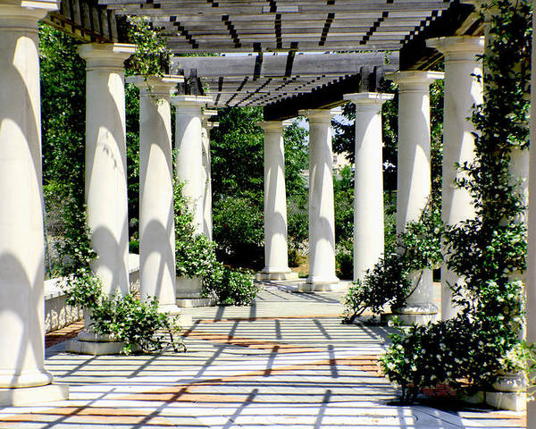 Pergola Poster featuring the photograph Pillars by Greg Sharpe