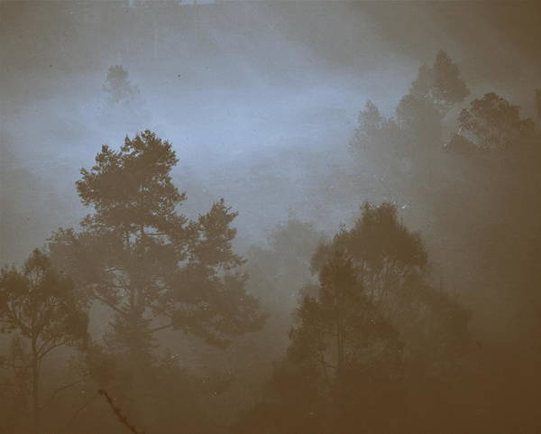 Pine Forest Poster featuring the photograph Pine Forest by Tran Minh Quan