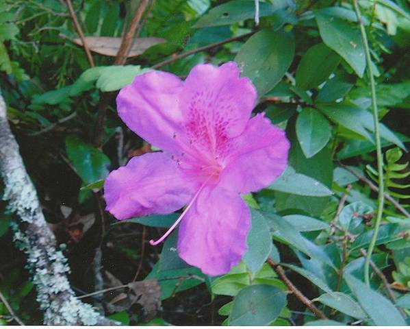 Photograph Poster featuring the photograph Pink Flower by Tara Kearce