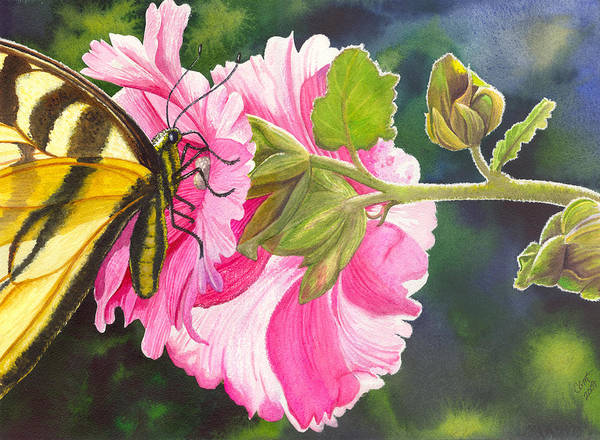 Hollyhock Poster featuring the painting Pink Hollyhock by Catherine G McElroy