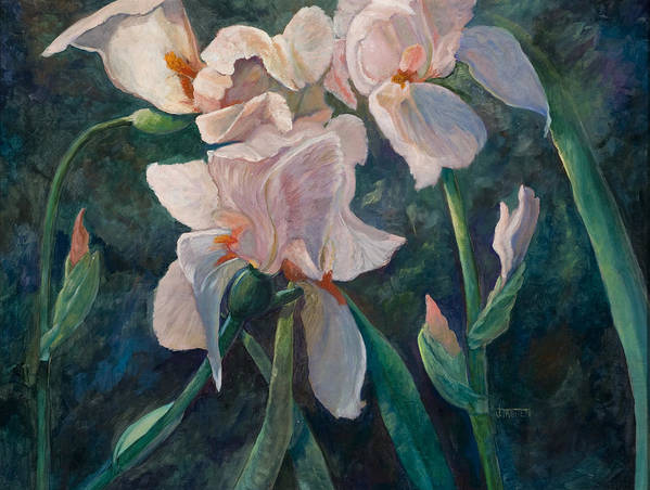 Floral Poster featuring the painting Pink Iris by Jimmie Trotter