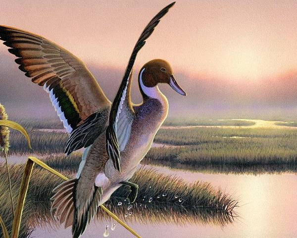 Pintail Duck Painting Original Wi Waterfowl Contest Marsh Hunting Stamp Sunrise Pink Bird Cattail Poster featuring the painting Pintail Duck-3rd Place Wi by Daniel Pierce