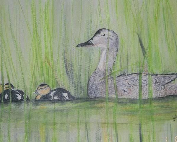 Pintail Ducks Poster featuring the painting Pintails In The Reeds by Debra Sandstrom