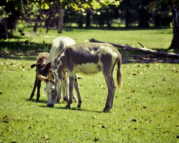 Animals Poster featuring the photograph Pinto Donkey I by Jan Amiss Photography