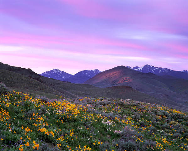 Pioneer Mountains Spring Poster featuring the photograph Pioneer Mountain Sunset by Leland D Howard