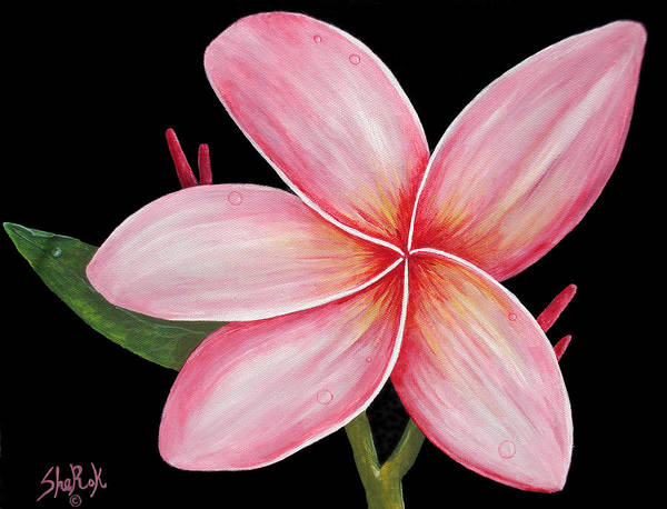 Floral Poster featuring the painting Plumeria by SheRok Williams
