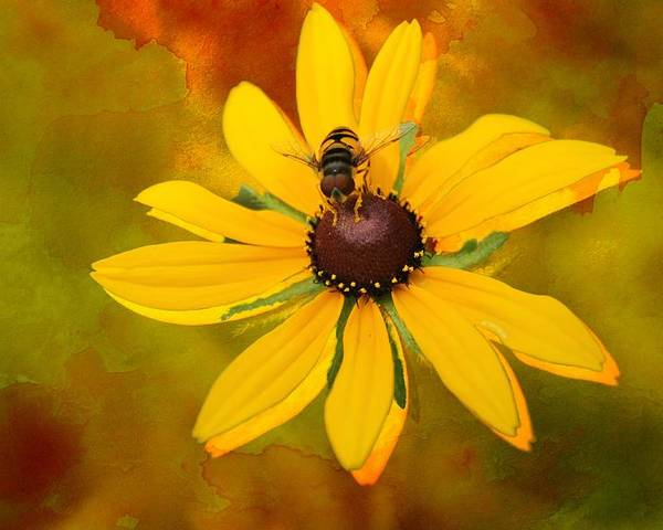 Summer Poster featuring the photograph Pollinating Susan by Lisa Hurylovich