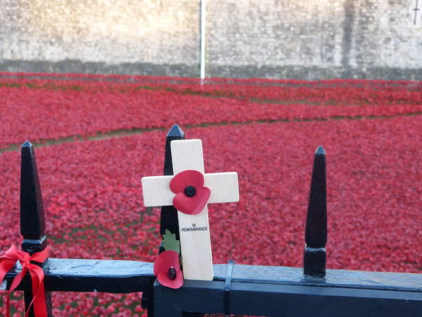 Poster featuring the photograph Poppies At Tower Of London by Nigel Photogarphy